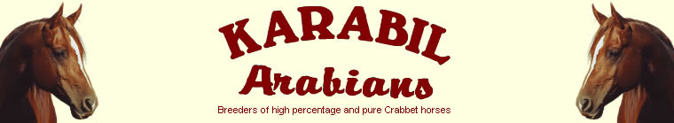 Karabil Arabians